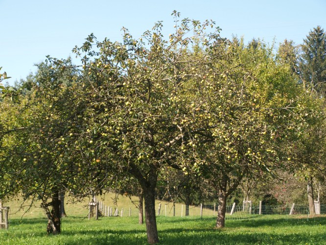 Streuobstwiese im Herbst